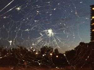 spiders-web-1349223881_b