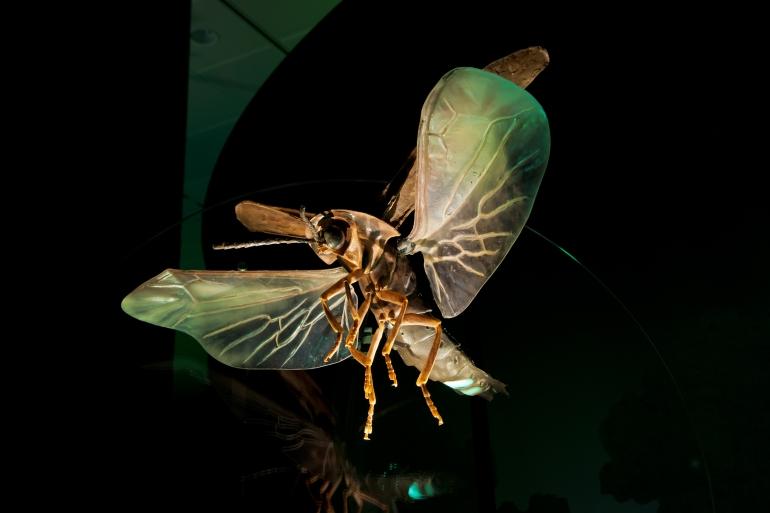 03. Male firefly model_DF.3711
